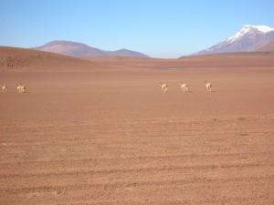0401-BolivSudLipez-dia13
