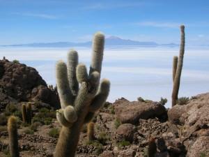 0478-BolivSalarDeUyuniIslaIncahuasiVulcaoTunupa(5400mts)-dia14